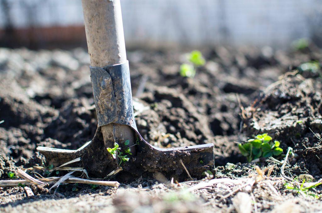 agriculture-backyard-blur-close-up-296230